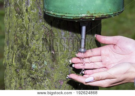 the girl washes hands in sink that hangs on a tree in the forest.