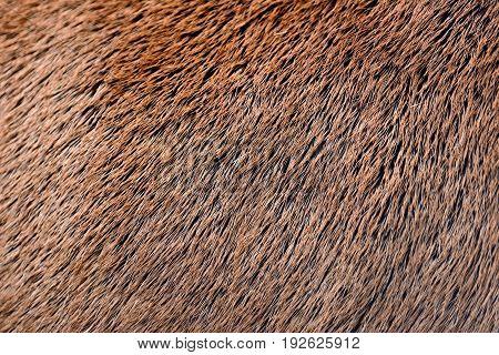 Deer Abstract Background Fur