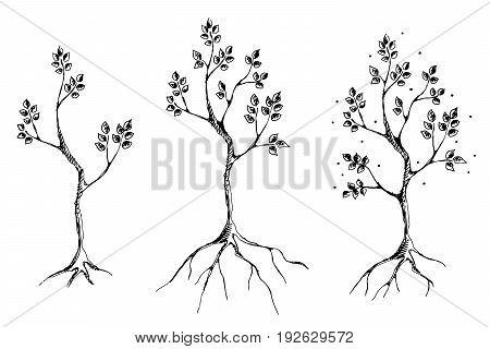 Vector Set Of Hand Drawn Illustrations, Decorative Ornamental Stylized Tree. Graphic Illustrations,