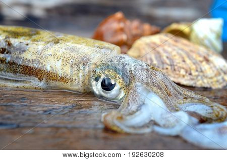 Eye Focusing Of Fresh And Life Soft Cuttle Fish