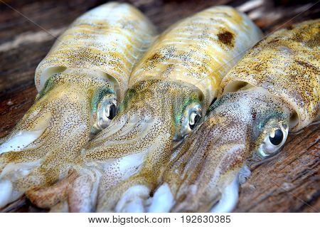 3 Fresh And Life Soft Cuttle Fish