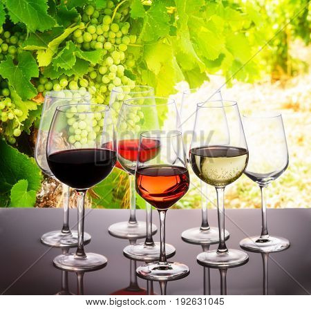 Wine tasting in wine yard, set of glasses with red, white and rose wine, bright green grapevine in background