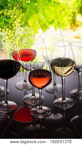 Wine tasting in wine yard, set of glasses with red, white and rose wine close up, bright green grapevine in background