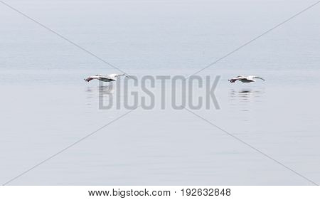 Birds fly over the surface of the water