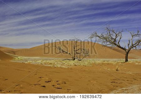 Namib Desert dunes after the rain in the morning