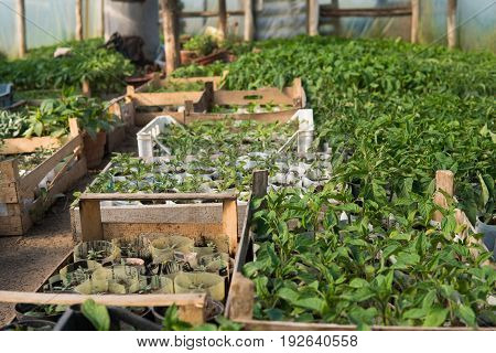 Small Green Plants Inside Of Greenhouse