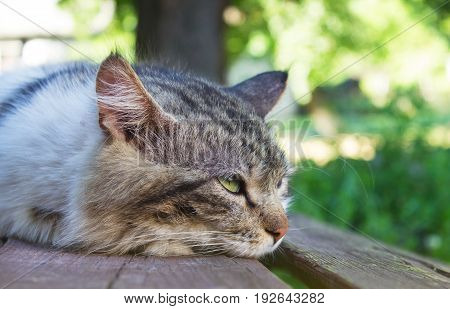 The cat lies on the bench and looks to the right, on a summer day