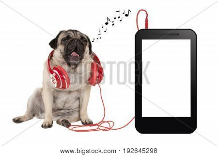 music app concept singing pug puppy dog with red headphones sitting next to blank phone or tablet