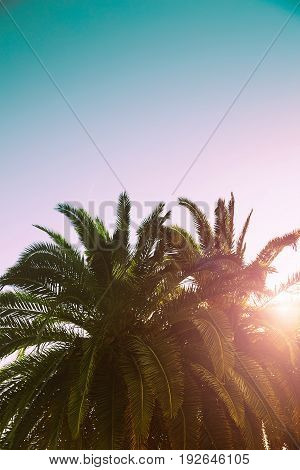 Palm Trees Branches Against Sky. Tropical Background