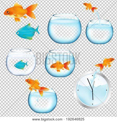 Fish And Aquariums Set