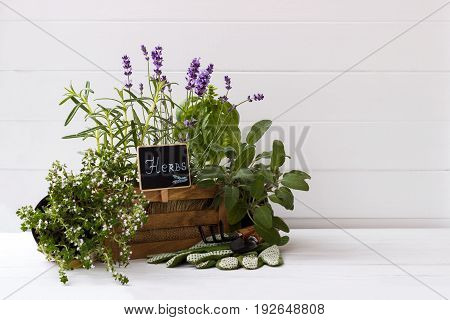 bunch of garden fresh herbs and garden tools over white background