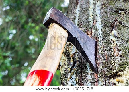 An Ax Is Stuck In A Tree In The Forest