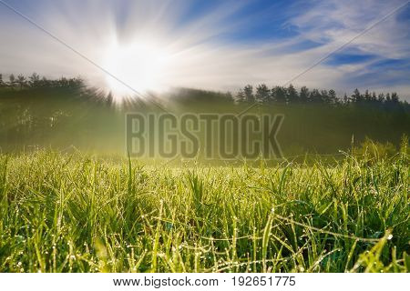 beautiful summer rural landscape with sunrise on a meadow forest and fog.