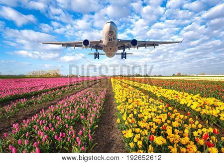 Commercial Plane And Tulips