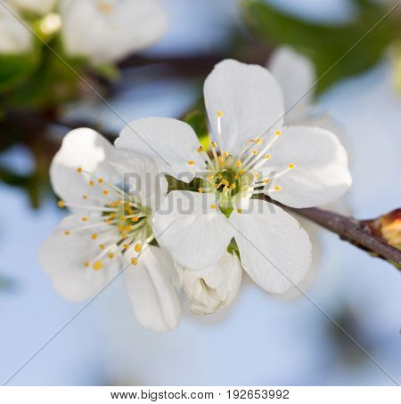 Beautiful flowers on the tree in nature