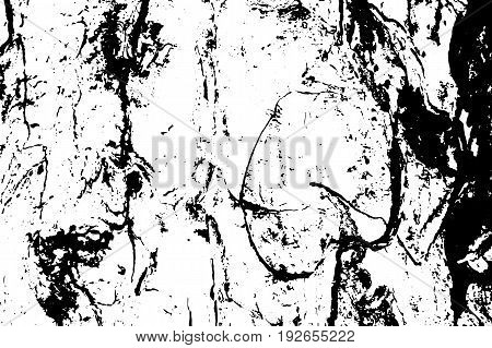 Old obsolete tree bark vector texture. Black and white bark ornament. Natural tree peel surface. Rough wood trace. Old tree trunk macro image Oak tree bark pattern. Shabby backdrop or vintage overlay
