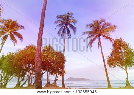 colorful color of palm trees on the beach in summer season