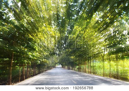 Road in motion speed on the forest road blurred background concept Tunnel effect or Visual tunnel phenomenon