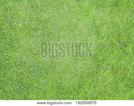 green grass surface outdoor spring nature backgroud