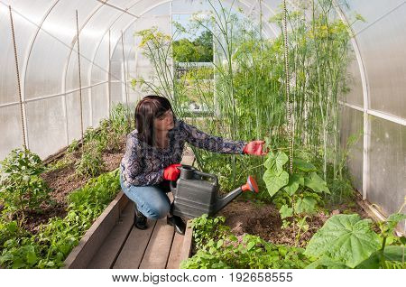 Girl Watering From  Watering Can Cucumber In A Greenhouse