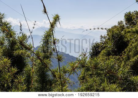 Surrounding mountains and bamboo trees along the Inca Trail, Peru