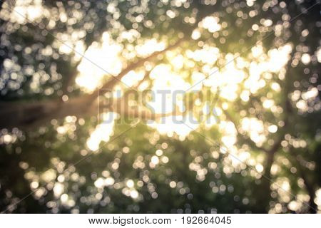 blurred scene of The sun shining through the trees down with bokeh for beautifully background.