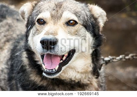 Portrait of a dog mongrel. The dog looks into the camera