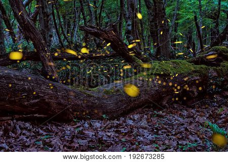 Magical Fireflies in the summer at the enchanted fairy forest