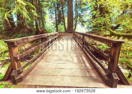 Wooden boardwalk in the forest