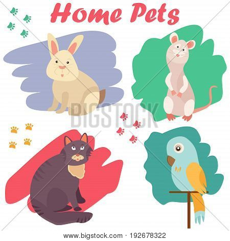 Bright images of domestic animals cat, parrot, rat and rabbit. Can be used for pet shops, clinics or pet food advertising.