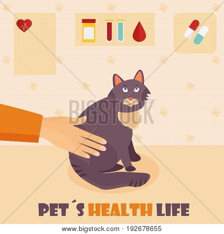 Veterinary medicine hospital, clinic for animals. Doctor with a cat. Health care or treatment for wild or domestic animals.
