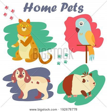 Bright images of domestic animals cat, parrot, dog and guinea. Can be used for pet shops and clinics, pet food advertising.