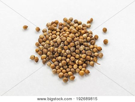 Seeds of coriander on a white background. Cilantro isolated. Common seeds.