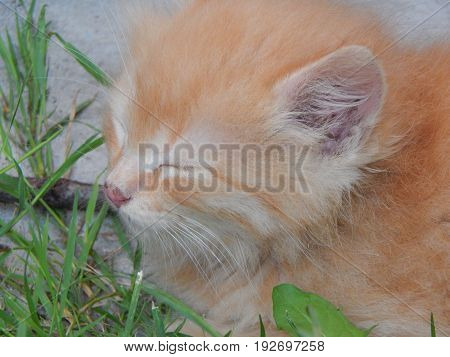 Cats and kittens play close-up young portrait