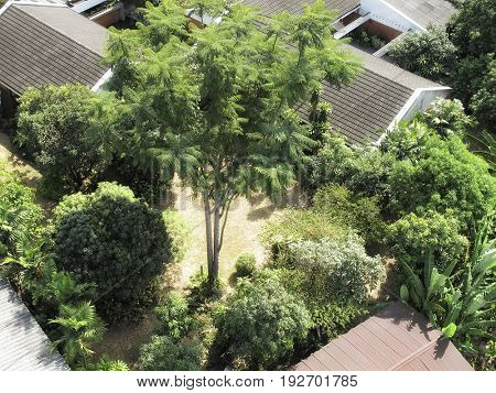 elevated view of residential building roof and tree