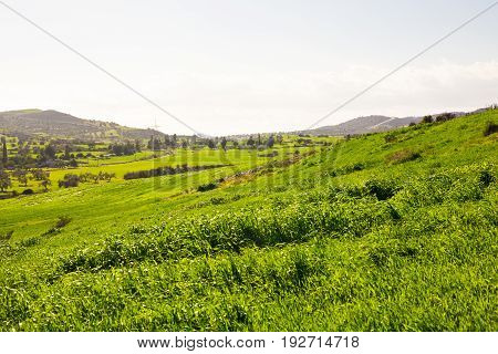 Green field in the mountain valley. Agricultural landscape in the summer time.