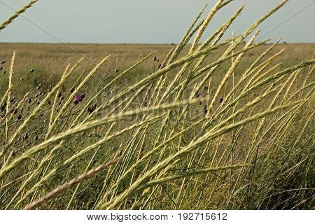 Field blooms the grasses flamboyance at the beginning of summer Biruchiy Island Ukraine