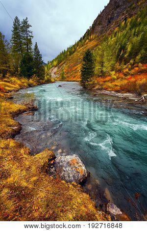 Orange autumn landscape flowing river in a mountainous wooded area.