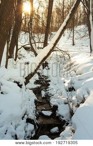 Flowing Stream Of Drinking Water Source Spring In Sunny Winter Public Park Pokrovskoe-Streshnevo.