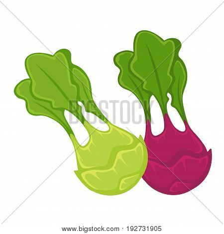 Healthy organic kohlrabi heads of green and maroon colors with long wavy leaves isolated cartoon vector illustration on white background. Vegetarian tasty food grown at farm full of vitamins.