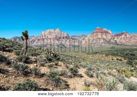 Joshua Tree And Mountains In Red Rock Canyon