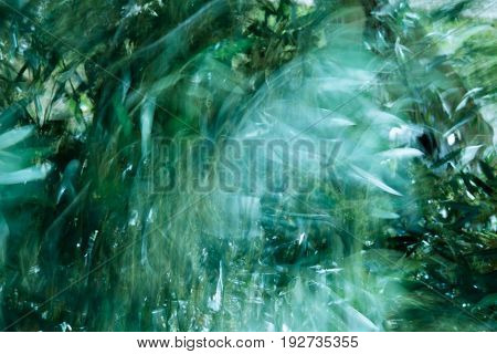 Abstract photograph of wind blowing through the brunches of olive trees