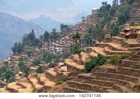 Terraced rice fields in a village of gurungs on Annapurna Circuit Trek in the Nepal Himalaya