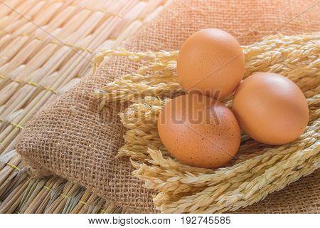 Fresh farm eggs ; egg chicken .