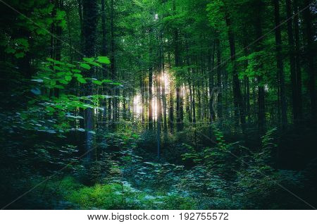 Light shining through the trees in the woods somewhere (maybe in a fairy tale)
