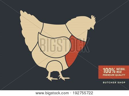 Cuts of chicken. Poster design for butcher shop, farmer market. Vector illustration.