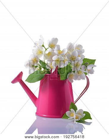 Bouquet Of White Jasmine Flowers With Leaves In Pink Watering Can