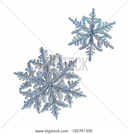 Two snowflakes isolated on white background. Macro photo of real snow crystals: large stellar dendrites with complex, elegant shape, glossy relief surface, elegant arms and fine hexagonal symmetry.