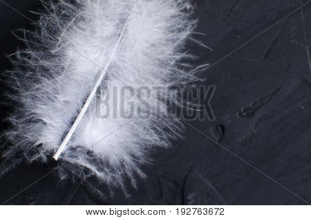 White goose feather on the concrete surface