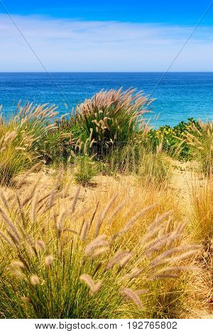 Sand sea oats along the Sea of Cortez
